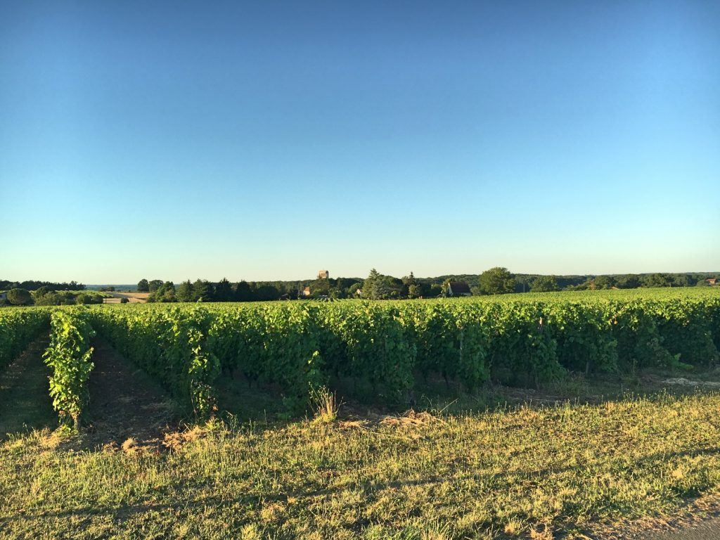 Beautiful vineyards of the Bergerac and Monbazillac wine region