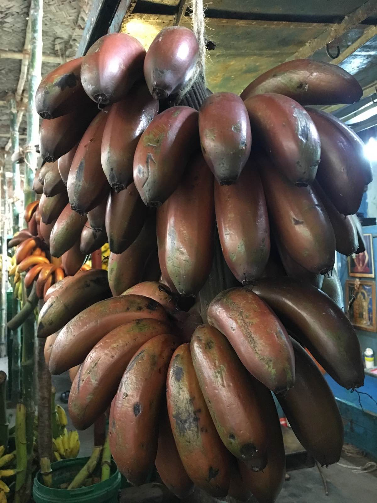 Red Bananas on a Madurai market rickshaw tour