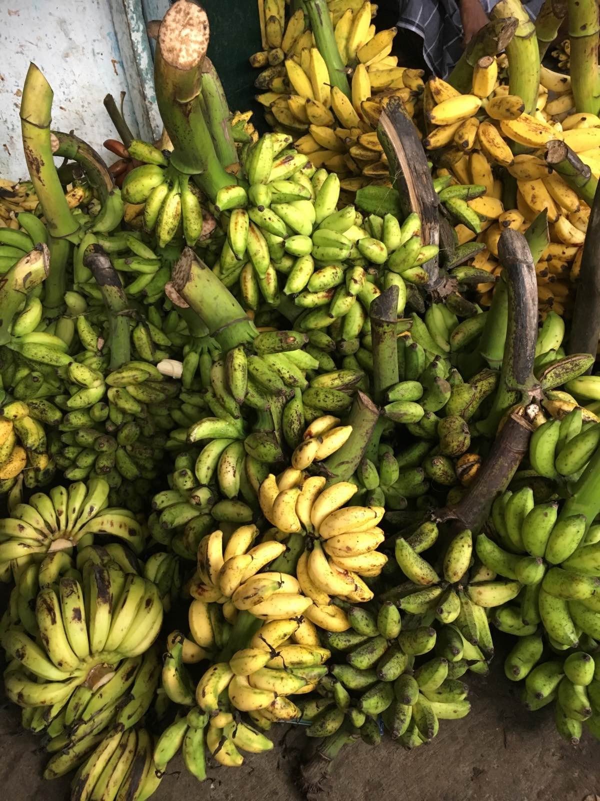 Inside the Banana Market